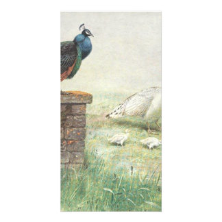 A Blue Peacock and white peahen with chicks Customized Photo Card