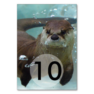A cute Brown otter swimming in a clear blue pool Table Cards