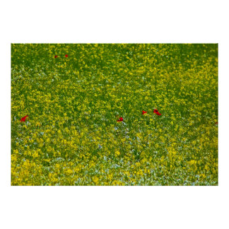 A hint of poppies poster
