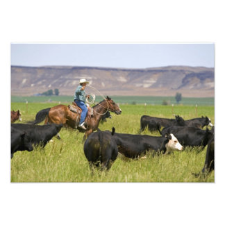 A rancher on horseback during a cattle roundup 2 photograph