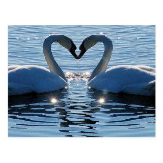 A Swan Heart Kiss, Reflections of Love Postcard