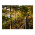 A wooden walkway in Acadia National Park Maine Postcard