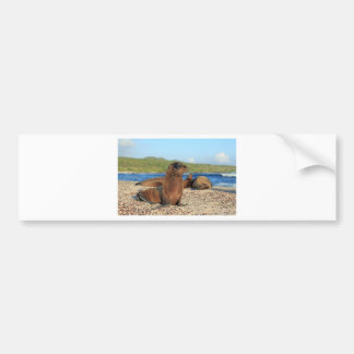 Adorable baby sea lion Galapagos Islands Bumper Sticker