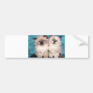 "Adorable ""Hug Me"" Persian Kittens Bumper Sticker"