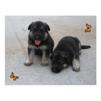 Adorable Puppy Postcard