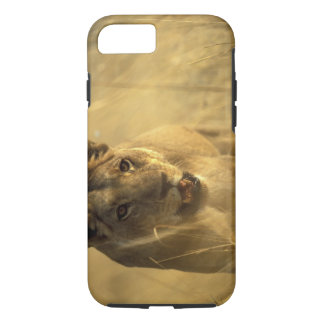 Africa, Botswana, Moremi Game Reserve, Lioness iPhone 7 Case