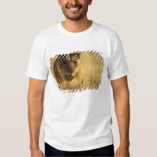 Africa, Botswana, Moremi Game Reserve, Lioness Shirts