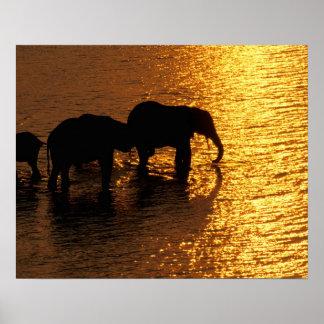 Africa, Botswana, Okavango Delta. African Poster