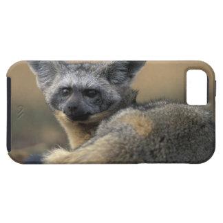 Africa, Kenya, Masai Mara Game Reserve, Bat iPhone 5 Case