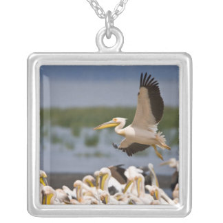 Africa. Kenya. White Pelicans on the shore of Square Pendant Necklace