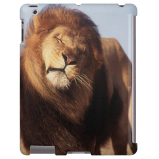 Africa, Male African Lion (Panthera Leo) iPad Case
