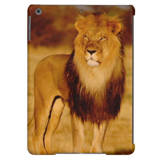 Africa, Namibia, Okonjima. Lone male lion Cover For iPad Air