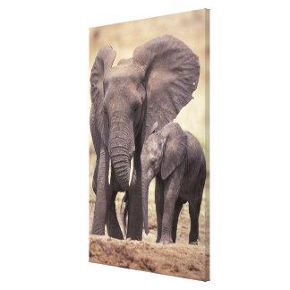Africa, Tanzania, Tarangire National Park. 2 Stretched Canvas Print