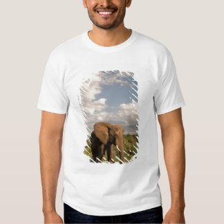 African Elephant, Loxodonta africana, out in a T Shirts