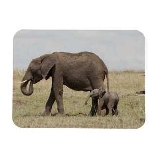 African Elephant mother with baby walking Rectangular Photo Magnet