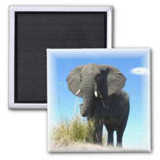 African Elephant Square Magnet