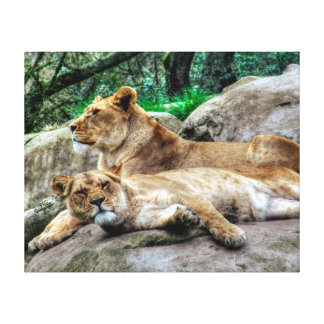 African Lioness Stretched Canvas Print