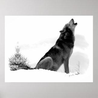 Alaskan Timber Wolf Poster