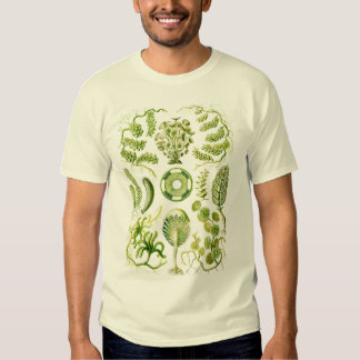 Algae Tshirts