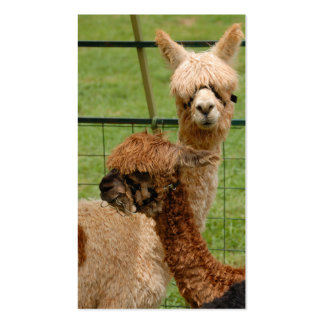 Alpacas Pack Of Standard Business Cards