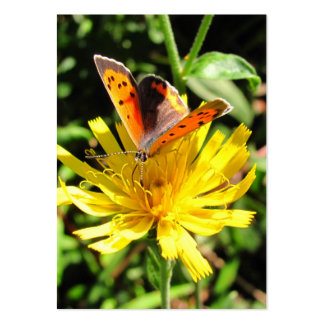 American Copper butterfly ~ ATC Pack Of Chubby Business Cards