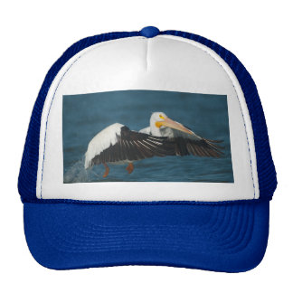 American White Pelican Taking Flight from water Cap