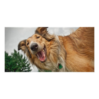 Amiga the Smiling Collie Photo Greeting Card