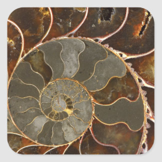 Ammolite Square Sticker