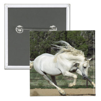 Andalusian Stallion running, PR 15 Cm Square Badge