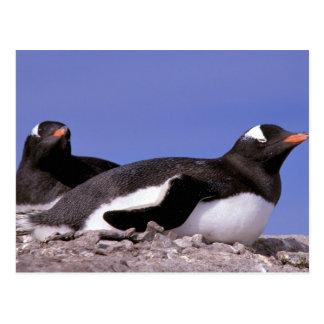 Antarctica, Antarctic Peninsula, Peterman Postcard