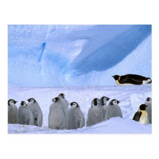Antarctica, Australian Antarctic Territory, Cape Postcard
