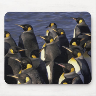 Antarctica, South Georgia Island. King penguins 2 Mouse Pad