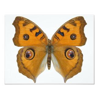 Argus Butterfly 11 Cm X 14 Cm Invitation Card