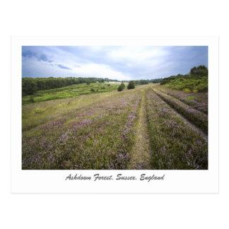 Ashdown Forest Postcard