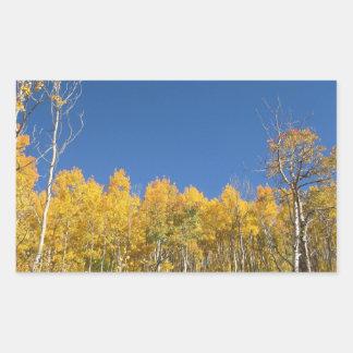Aspen Trees, Colorado Rectangular Sticker