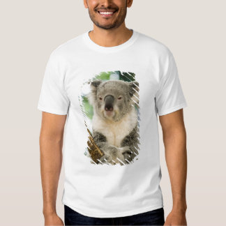 Australia, Queensland, Brisbane, Fig Tree Shirt