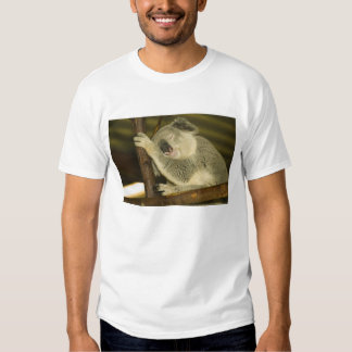 Australia, Queensland, Brisbane. Fig Tree T Shirts