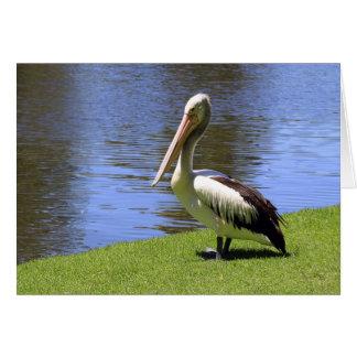 Australian Pelican along the River Torrens. Greeting Card