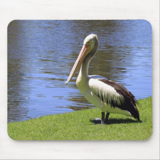 Australian Pelican along the River Torrens. Mouse Pad
