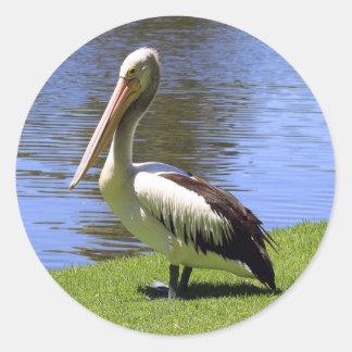 Australian Pelican along the River Torrens. Round Sticker