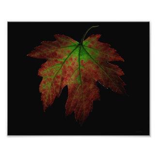 Autumn Leaf Photo Art