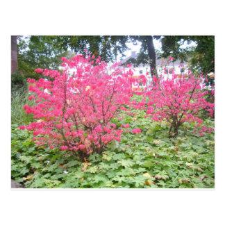 Autumn Shrubs Postcard