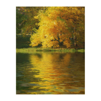 Autumn tree in the forest with reflection wood prints