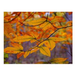 Autumn Yellow Leaves Postcard