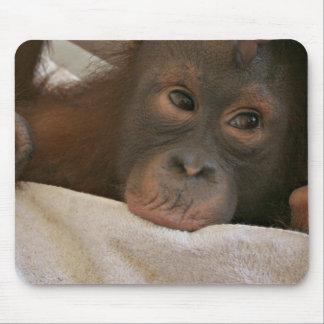 Baby Chimp Mousepad
