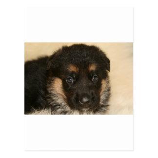 "Baby German Shepherd Puppy ""Khloe"" Postcard"