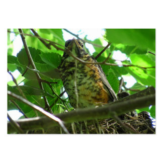 Baby Robin ~ ATC Pack Of Chubby Business Cards