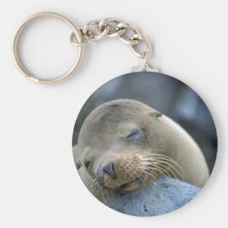 Baby sea lion, Galapagos Islands Basic Round Button Key Ring