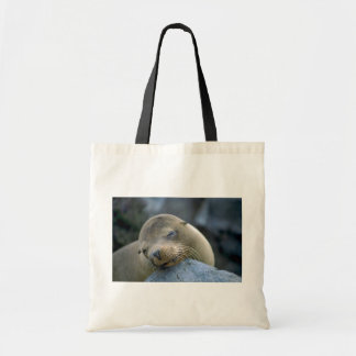 Baby sea lion, Galapagos Islands Budget Tote Bag