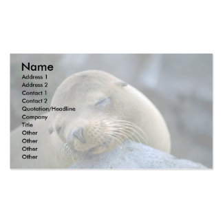 Baby sea lion, Galapagos Islands Pack Of Standard Business Cards